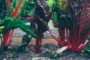 Vegetable Patch Ideas for Beginners: Why, What, and How to Get Started